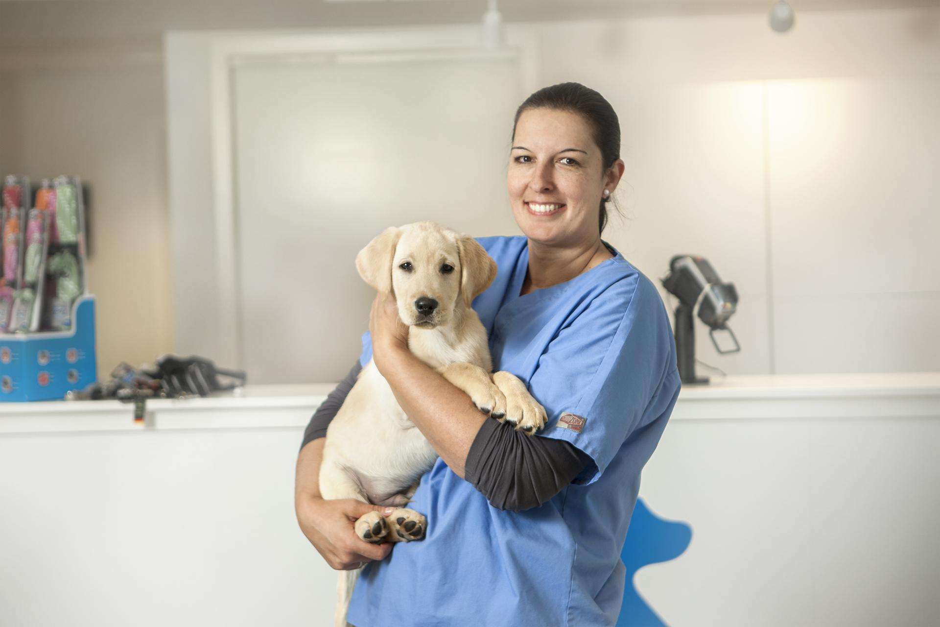Labradorhund innom Strand Smådyrklinikk